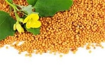 history of mustard seed